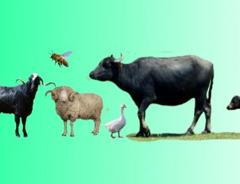 Hayvancılık Yatırımlarına Devletten Hibe Destek